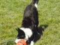 Molly play bow